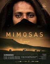 Постер к фильму «Мимозы»