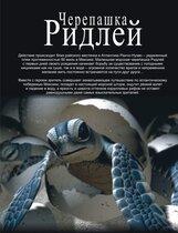 Постер к фильму «Черепашка Ридлей 5D»