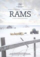 Постер к фильму «Бараны»