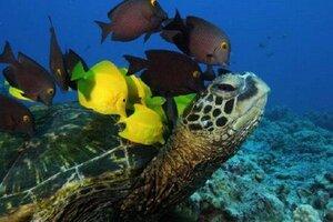кадры и фото из фильма Тайны подводного мира 3D