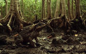 кадры и фото из фильма Тростниковые жабы: Оккупация 3D
