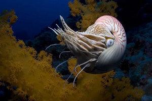 кадры и фото из фильма На глубине морской IMAX 3D