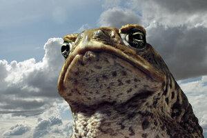 кадры и фото из фильма Тростниковые жабы: Оккупация