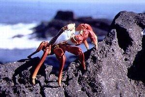 кадры и фото из фильма Галапагосы 3D