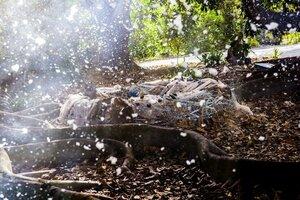 кадры и фото из фильма Проклятие спящей красавицы