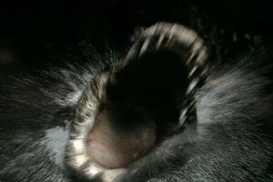 кадры и фото из фильма Крокодил