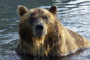 кадры и фото из фильма Земля медведей 3D