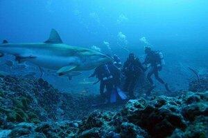 кадры и фото из фильма Акулы 3D