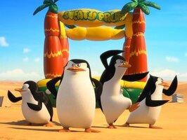 кадры и фото из фильма Пингвины Мадагаскара