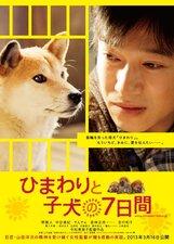 Постер к фильму «Семь дней Химавари и ее щенков»