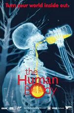 Постер к фильму «Человеческое тело»