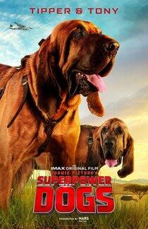 Постер к фильму Суперсобаки