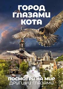 Город глазами кота