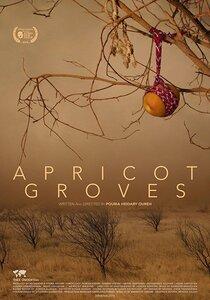 Постер к фильму Абрикосовые рощи