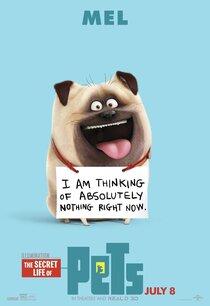 Постер к фильму Тайная жизнь домашних животных