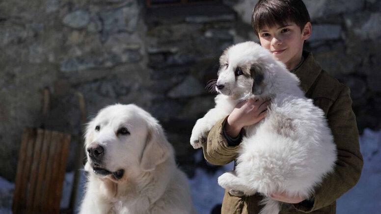 «Белль и Себастьян: Друзья навек»: Рецензия Киноафиши