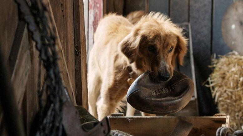 «Собачья жизнь»: Рецензия Киноафиши