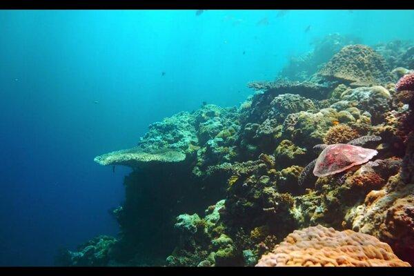 кадры и фото из фильма Последний риф 3D