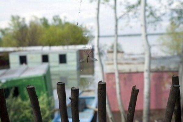 кадры и фото из фильма Проблема с комарами и другие истории