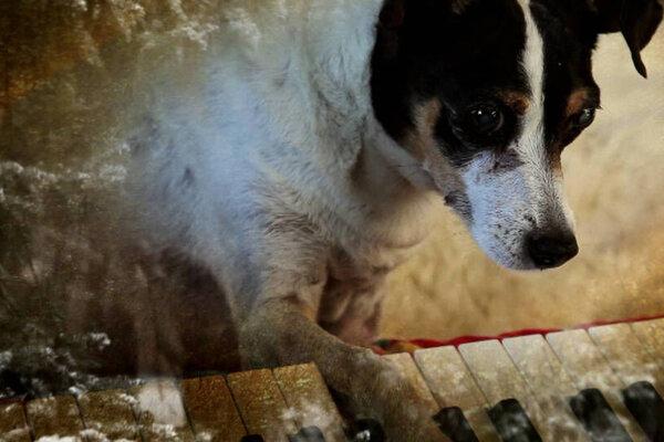 кадры и фото из фильма Собачье сердце