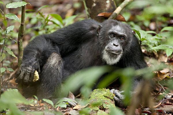 кадры и фото из фильма Шимпанзе