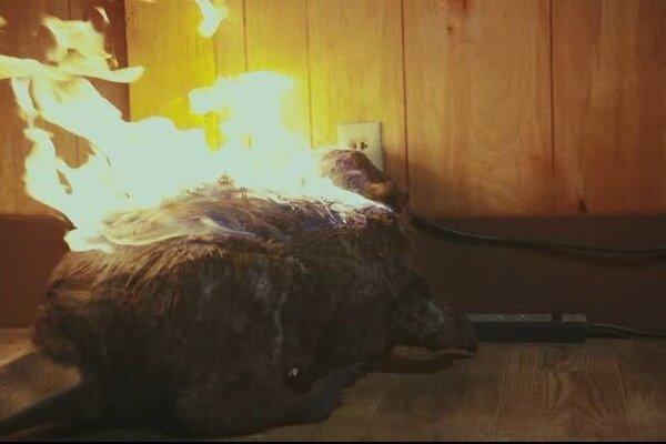 кадры и фото из фильма Бобры-зомби