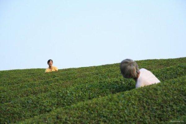 кадры и фото из фильма Траурный лес