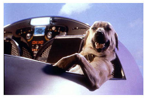 кадры и фото из фильма Кошки против собак