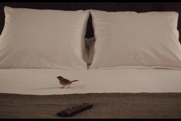 кадры и фото из фильма Люди и птицы