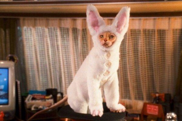 кадры и фото из фильма Кошки против собак: Месть Китти Галор 3D