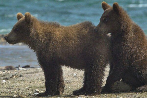 кадры и фото из фильма Медведи Камчатки. Начало жизни