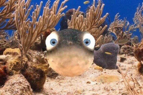 кадры и фото из фильма Рыбки