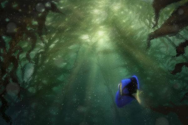 кадры и фото из фильма В поисках Дори