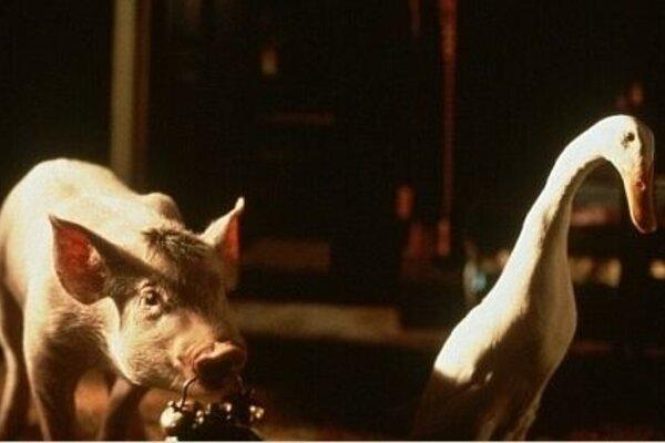 кадры и фото из фильма Бэйб, четвероногий малыш