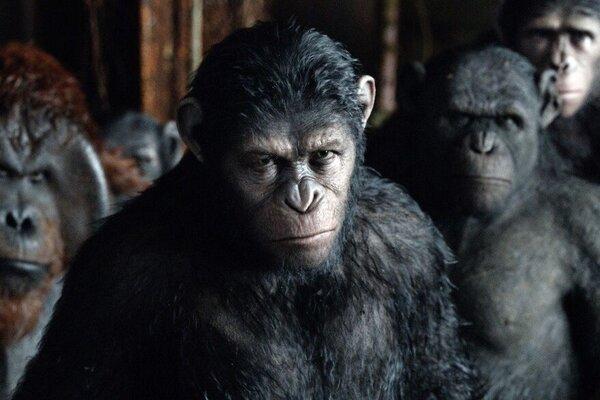кадры и фото из фильма Планета обезьян: Революция