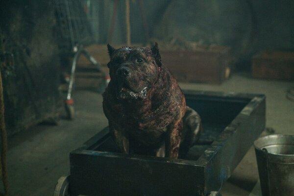 кадры и фото из фильма Цепной пес