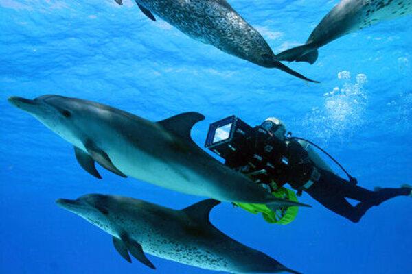 кадры и фото из фильма Большое путешествие вглубь океанов 3D