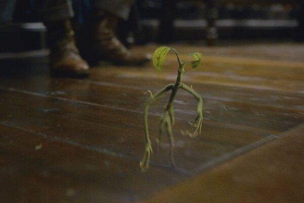 кадры и фото из фильма Фантастические твари: Преступления Грин-де-Вальда