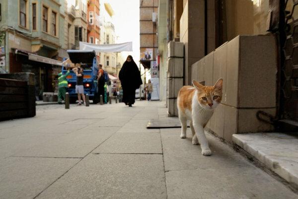 кадры и фото из фильма Город Кошек