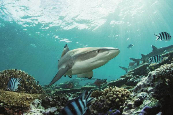 кадры и фото из фильма Альдабра: Путешествие к таинственному острову