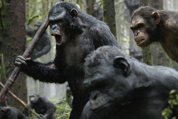 кадры и фото из фильма Планета обезьян: Революция 3D