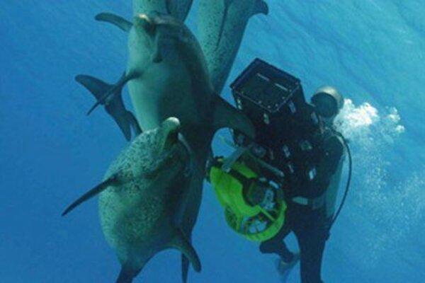 кадры и фото из фильма Дельфины и Киты 3D