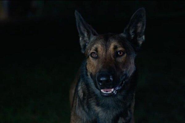 кадры и фото из фильма Макс