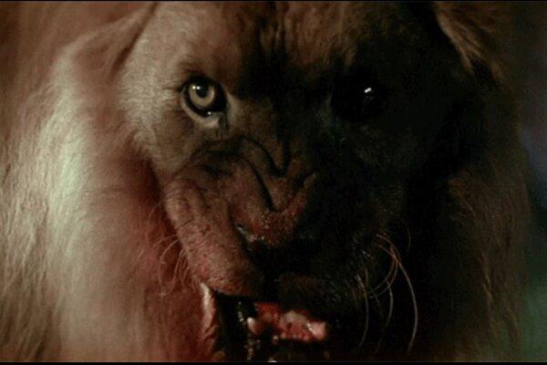 кадры и фото из фильма Призрак и тьма