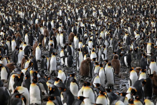 кадры и фото из фильма Король пингвинов 3D