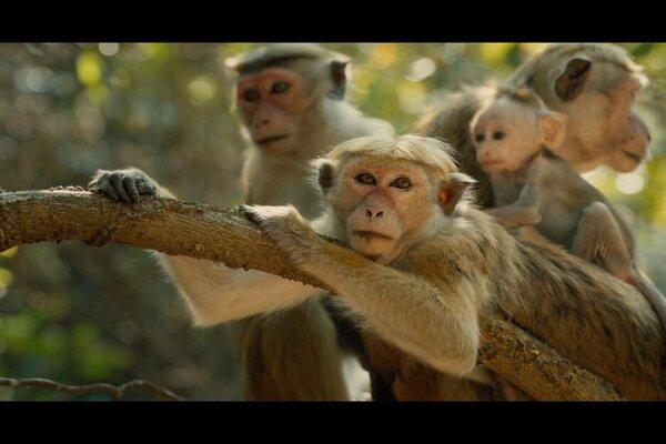 кадры и фото из фильма Королевство обезьян