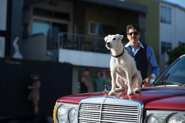 кадры и фото из фильма Его собачье дело