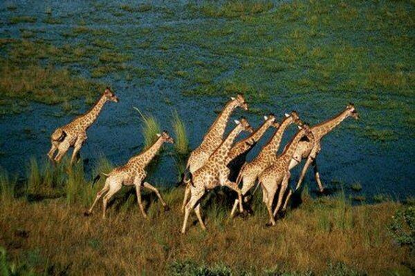 кадры и фото из фильма Окаванго 3D. Африканское сафари