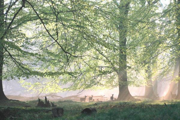 кадры и фото из фильма Зеленая планета