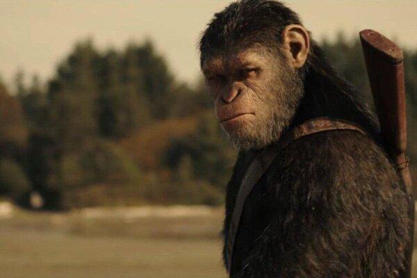 кадры и фото из фильма Планета обезьян: Война